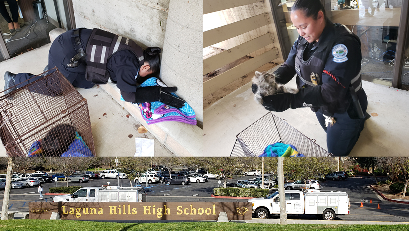 animal services officer helping kittens